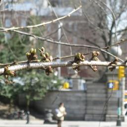 That Spring